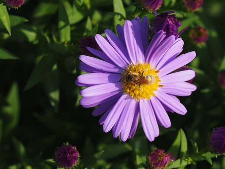Flower, Insect, Nature, Bee, Animal, Macro