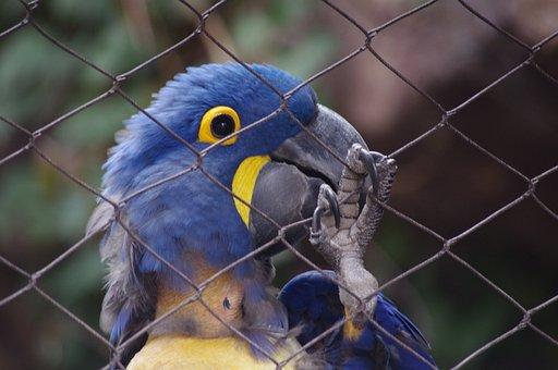 Parrot, Caged, Cage, Bird, Blue, Zoo, Philadelphia
