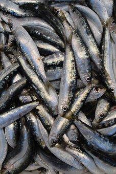 Fish, Sardines, European Sardine, Fang, Frisch, Eat