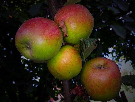 Park, Apple, Fruit, Garden, Autumn, Bio, Eco, Products