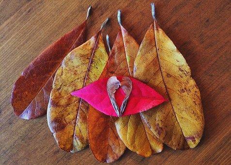 Fall, Autumn, Leaves, Season, Leaf