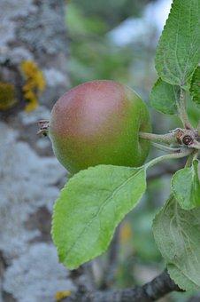 Apple, Apple Tree, Fruit, Nature, Movies, Eco, Product