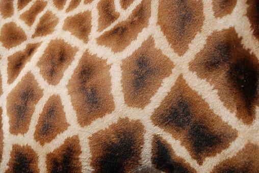 Patterns, Giraffe, Reticulated Giraffe, Africa, Animal
