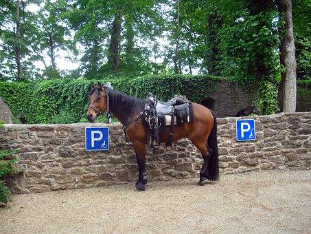 Horse, Mount, Saddle, Brown, Livestock, Saddlery