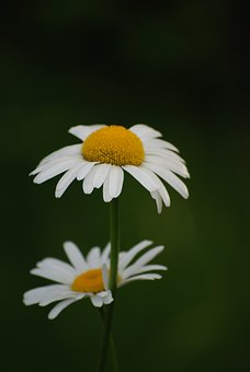 Flower, Flowers, Summer Flower, Blooms, Bloom, Plant