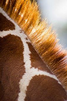 Giraffe, Pattern, Animal, Wildlife, Zoo, Close Up