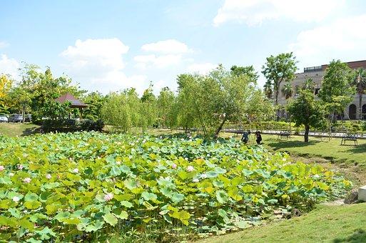 Lotus Pond, Asian University, Blue Day, Baiyun, Nature