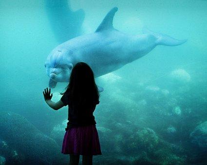 Dolphin, Friens, Girl, Aquarium, Sea, Fauna, Mamals