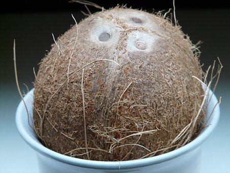 Coconut, Germ Holes, Coconuts, Exotic, Sweet, Palm
