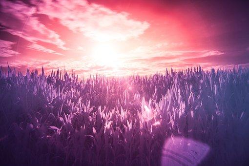 Infrared, Field, Dream, Surreal, Colors, Landscape
