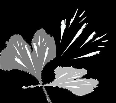 Ginko, Green, Plant, Nature, Flowers, Ginkgo Biloba