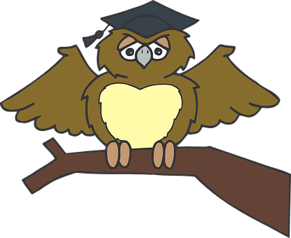 Owl, Graduate, Sitting, Tree, Branch, Brown, Wearing