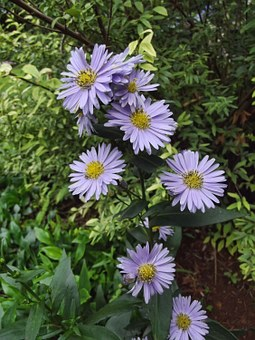 Flowers, Nature, Purple, Country, Natural, Green, Plant