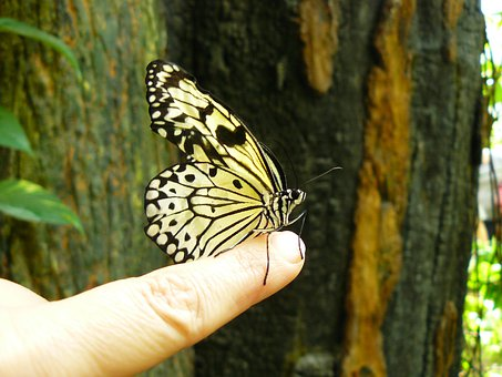 Butterfly, Animal, Insect, Animals, Butterflies, Fauna