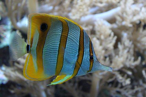 Fish, Ocean, Nature, Underwater, Coral, Reef, Sea