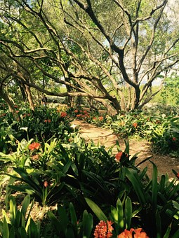 Garden, Summer, Delight, Green, Nature, Plant