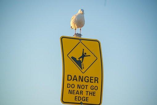 Seagull, Bird, Gull, Shore Bird, Perched, Perching