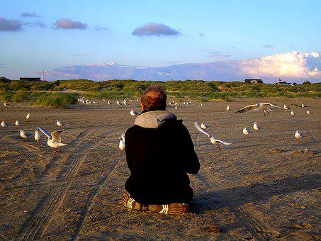 Beach, Island, Holiday, Gulls, Gulls Feed Nordsee