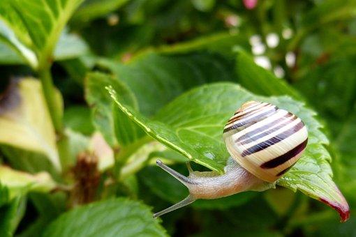 Snail, Garden Tape Worm, Leaf, Cepaea Hortensis