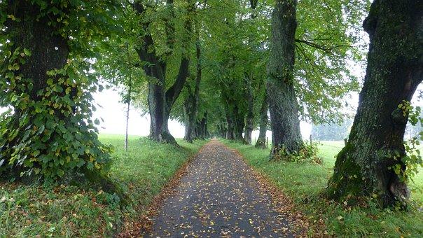 Allgäu, Marktoberdorf, Lindenallee, Autumn, Leaves, Fog