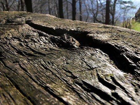 Log, Lying, Oak, Weathered, Forest, Nature, Waldsterben