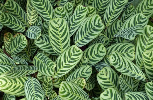 Leaves, Nature, Plant, Green, Tropical, Summer, Foliage
