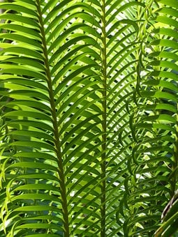 Palm Leaves, Plant, Palm Tree, Green, Tropical, Summer