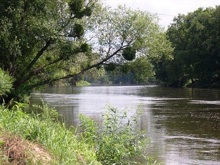 Poland, River, Warta, Mistletoe