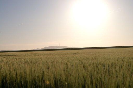 Thunder Mountain, Mountain, Sunset, Field, Agriculture