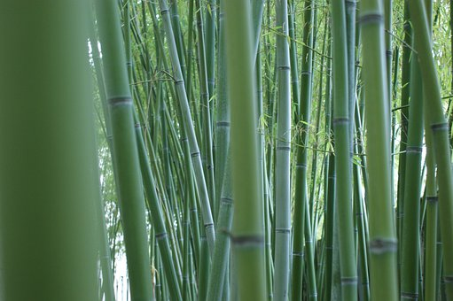 Bamboo, Stalks, Bamboo Forest, Bamboo Rods, Green