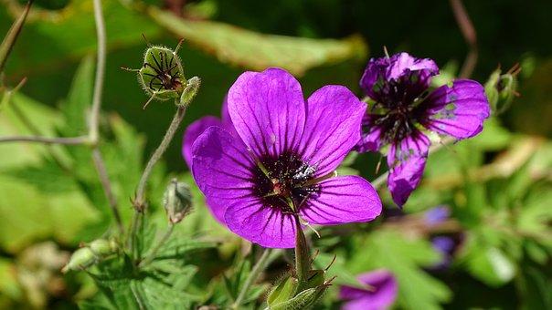 Batumi, Flowers, Mountains, Purple