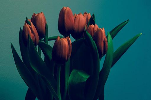 Tulips, Bunch, Decoration, Spring, Flowers, Floral