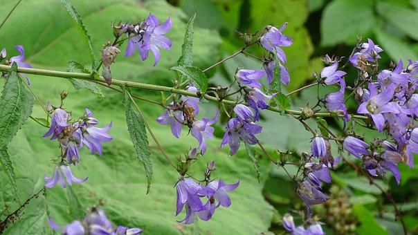 Batumi, Flowers, Mountains, Forest, Garden