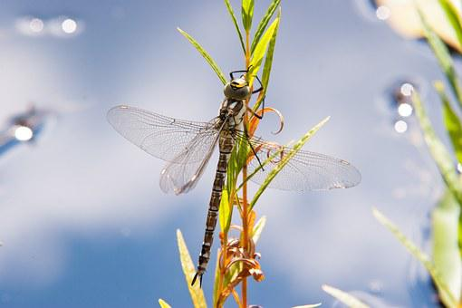 Animals, Water, Insect, Wing, Lake, Close, Plant