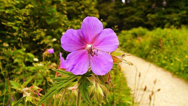 Flower, Primrose, Primula, Bloom, Blossom, Spring, Park