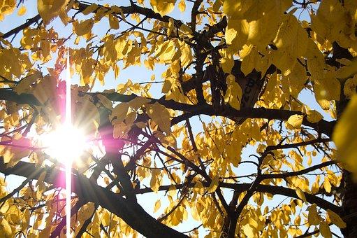 Autumn, Fall Foliage, Autumn Sun, Sun, Leaves, Yellow