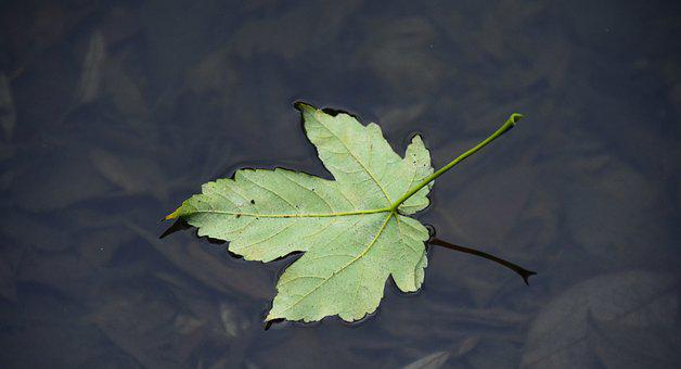 Leaf, Water, Leaf On Water, Swim, Autumn, Lonely, Quiet