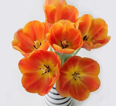 Tulips, Orange, Bouquet, Sprung, Vase, Flowers