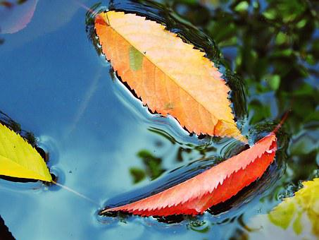 Leaves, Water, Blue, Red, Orange, Sheet In The Water