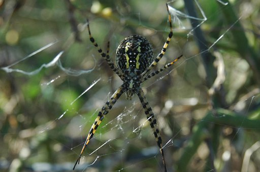 Spider, Web, Insect, Poisonous, Spooky, Scary, Cobweb