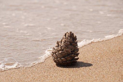 Pine Cones, Beach, Sand, Water