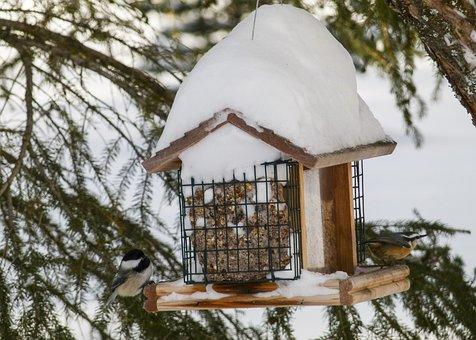 Bird House, Bird, Animal, Wildlife, Feathered