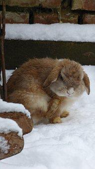 Rabbit, Snow, Animal, Pet, Fur, Nager, Clean, Cold