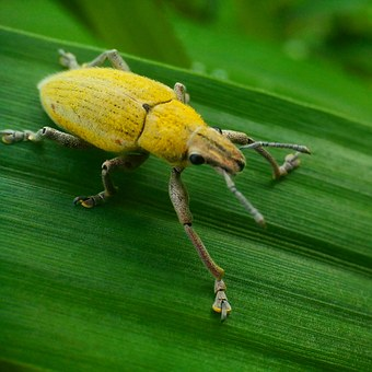 Insects, Leaf, Yellow, Animals, Green, Ketch, Field