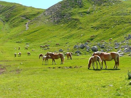Horses, Herd, Avellino, Mountain, Dolomites, Fuciade