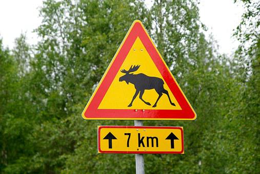 Finland, Panel, Deer, Momentum, Signalling