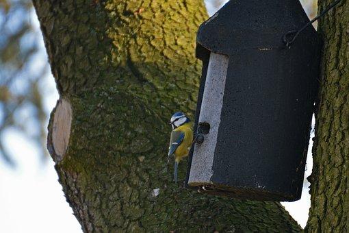 Blue Tit, Aviary, Bird, Nature, Tit, Winter, Small Bird