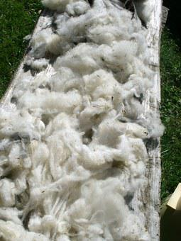 Raw Wool, Pure New Wool, Sheep's Wool, Washed