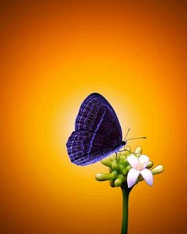 Butterfly, Flowers, Own, Drink, Stalk, Resting, Purple
