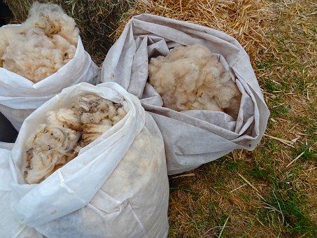Sheep's Wool, Sheep, Wool, Schur, Schäfer, Farm